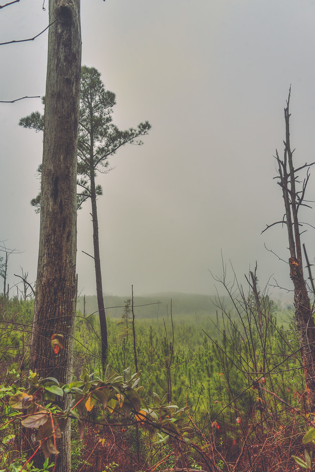Foggy Day