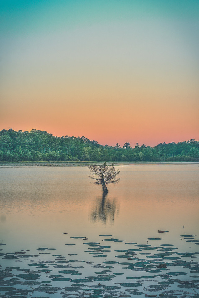 Tree in the Water