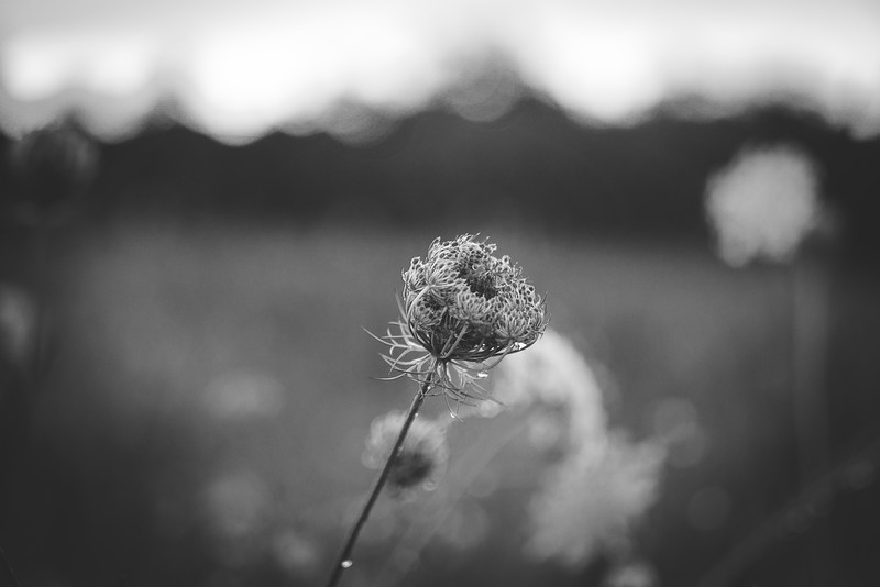 Black and White Bokeh