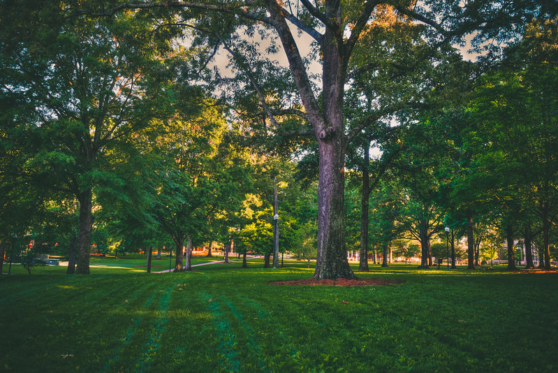 In the Grove