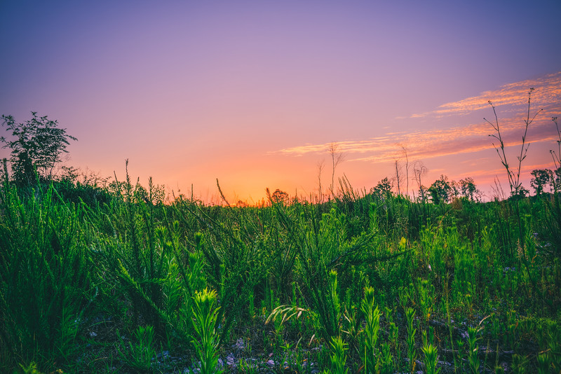 High Grass Sunset
