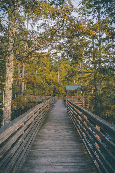 Refuge Boardwalk