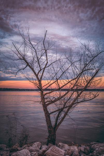 Tree on the Lake