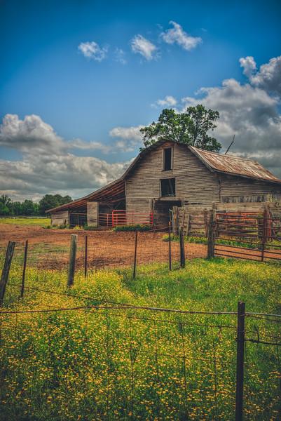 Afternoon Barn
