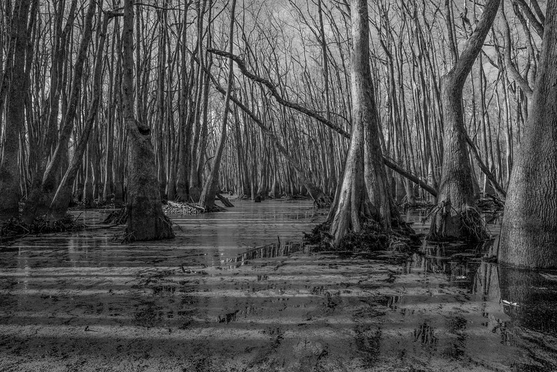 "IPA 2017 - Honorable Mention - Nature : Trees Category <a href=""http://photoawards.com/en/"">http://photoawards.com/en/</a><br /> This series was created to bring awareness to the Chakchiuma Swamp. <a href=""http://friendsofcsna.com/"">http://friendsofcsna.com/</a>"