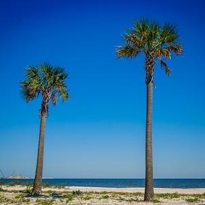 Two Gulfport Palms