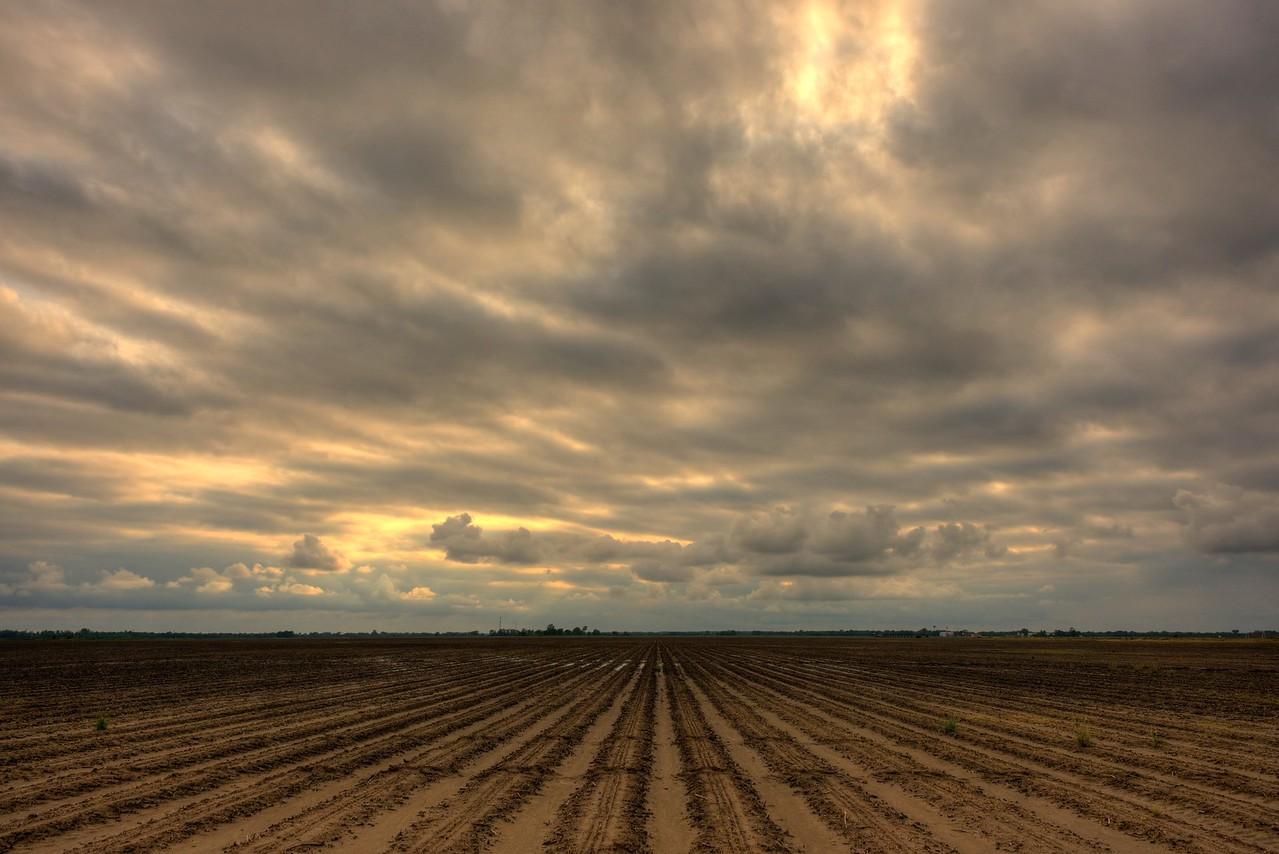 Empty Crop Field