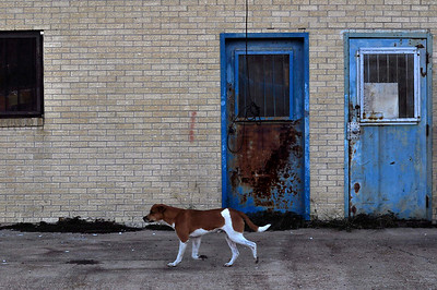 Rusted doors and rust color dog walks the Streets of Shaw, the poorest region in America