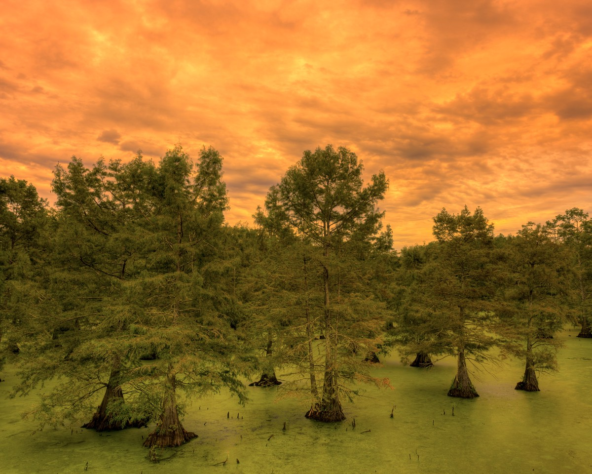 Wicked Skies Above Cypress Trees