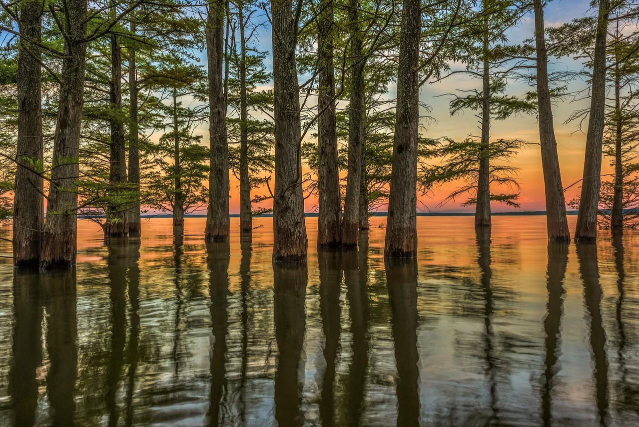 Sunset Through Cypress Trees