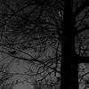 Streaks In The Tree