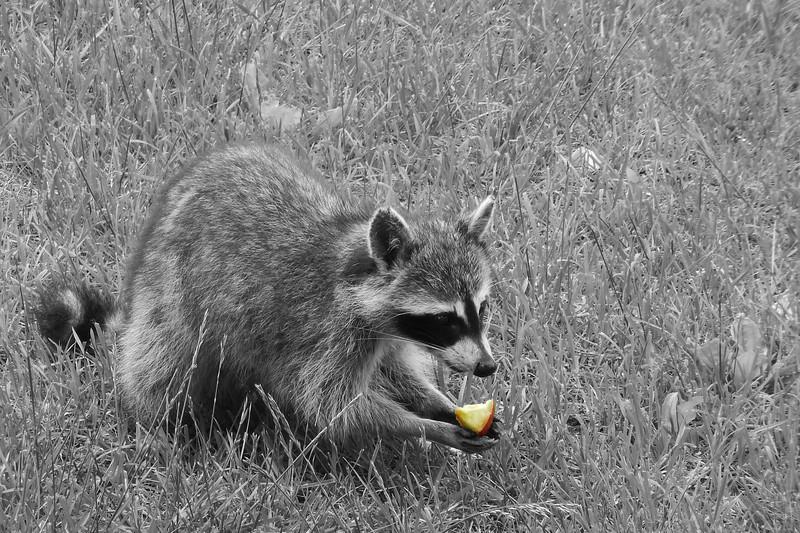 I Like Apples