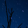 My Lake Tree Star Streaks