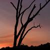 Sunset Dead Tree