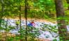 Missouri - Tour de Wildwood - Rockwoods Reservation - C2-0054 - 72 ppi-2