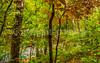 Missouri - Tour de Wildwood - Rockwoods Reservation - C2-0270 - 72 ppi-2
