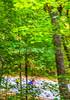 Missouri - Tour de Wildwood - Rockwoods Reservation - C2-0054 - 72 ppi