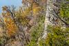 Cyclists (look hard) on Katy Trail near Weldon Springs trailhead in Missouri - C1-0018 - 72 ppi