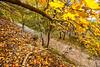 Katy Trail near Rocheport, MO - C2-0053 - 72 ppi