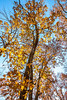 Trees on bluff above Katy Trail near Weldon Springs trailhead in Missouri - C1-0182 - 72 ppi
