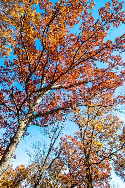 Trees on bluff above Katy Trail near Weldon Springs trailhead in Missouri - C1-0177 - 72 ppi