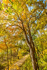 Print - sRGB - Katy Trail near Rocheport, MO - C2-0130 - 300 ppi