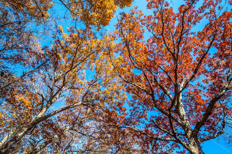 Trees on bluff above Katy Trail near Weldon Springs trailhead in Missouri - C1-0181 - 72 ppi
