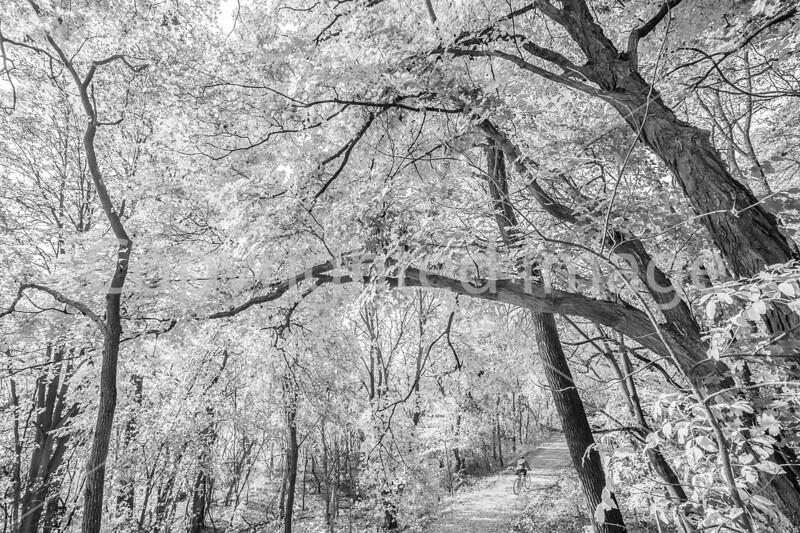 Katy Trail near Rocheport, MO - C1-2 - 72 ppi-6