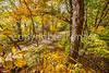 Katy Trail near Rocheport, MO - C2-0166 - 72 ppi