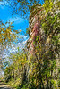 Katy Trail near Rocheport, MO - C1-0021 - 72 ppi