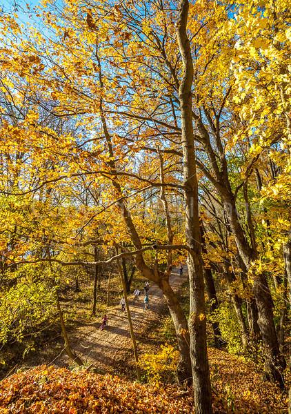 Katy Trail near Rocheport, Missouri - 11-9-13 - C2-0117 - 72 ppi