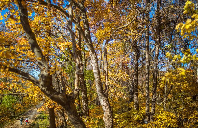 Katy Trail near Rocheport, Missouri - 11-9-13 - C1-0217 - 72 ppi