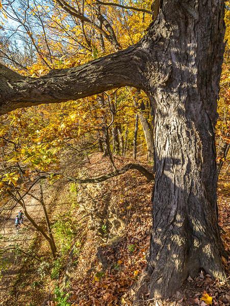 Katy Trail near Rocheport, Missouri - 11-9-13 - C1-0463 - 72 ppi-2