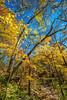 Katy Trail near Rocheport, Missouri - 11-9-13 - C1-0061 - 72 ppi