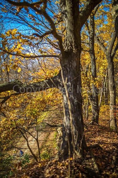 Katy Trail near Rocheport, Missouri - 11-9-13 - C1-0275 - 72 ppi