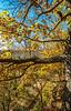 Katy Trail near Rocheport, Missouri - 11-9-13 - C1-0403 - 72 ppi
