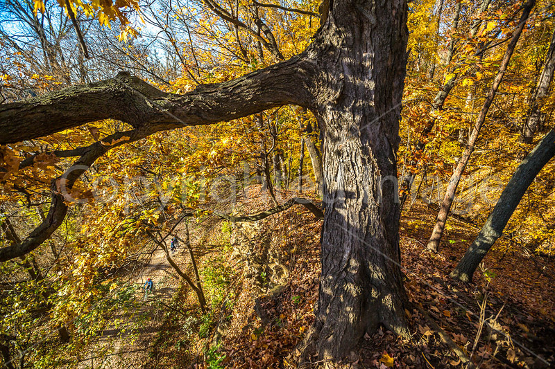 Katy Trail near Rocheport, Missouri - 11-9-13 - C1-0466 - 72 ppi