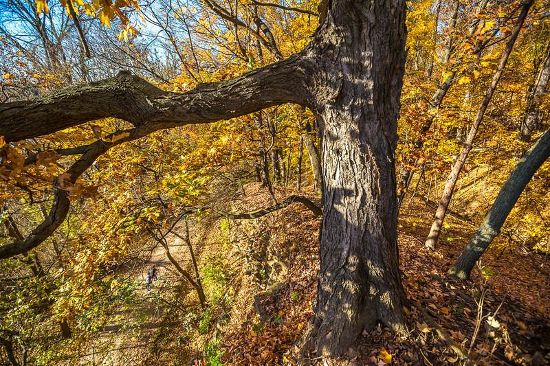Katy Trail near Rocheport, Missouri - 11-9-13 - C1-0461 - 72 ppi