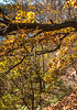 Katy Trail near Rocheport, Missouri - 11-9-13 - C1-0397 - 72 ppi
