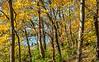 Katy Trail near Rocheport, Missouri - 11-9-13 - C1-0094 - 72 ppi-2