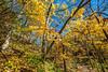 Katy Trail near Rocheport, Missouri - 11-9-13 - C1-0063 - 72 ppi