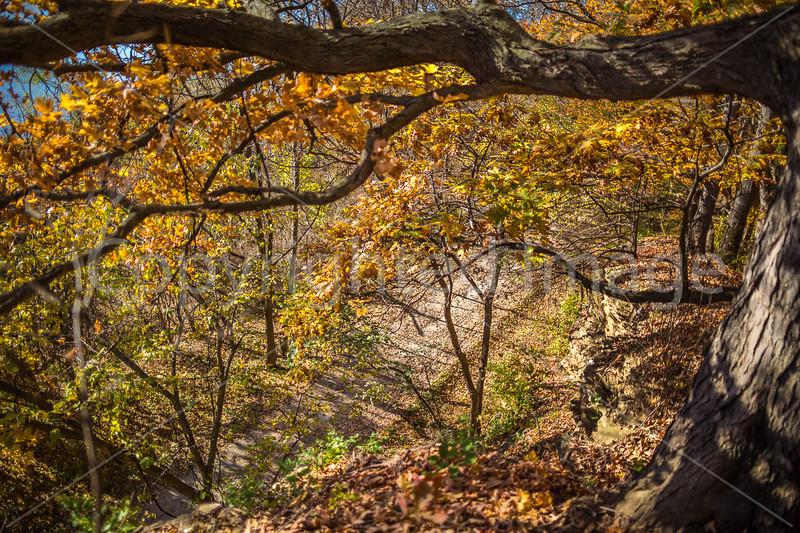 Katy Trail near Rocheport, Missouri - 11-9-13 - C1-0286 - 72 ppi