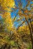 Katy Trail near Rocheport, Missouri - 11-9-13 - C1-0046 - 72 ppi