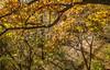 Katy Trail near Rocheport, Missouri - 11-9-13 - C1-0374 - 72 ppi
