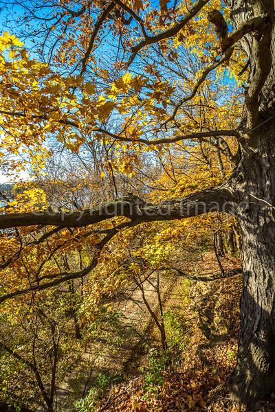 Katy Trail near Rocheport, Missouri - 11-9-13 - C1-0400 - 72 ppi-2