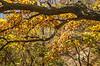 Katy Trail near Rocheport, Missouri - 11-9-13 - C1-0382 - 72 ppi