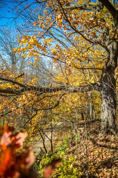 Katy Trail near Rocheport, Missouri - 11-9-13 - C1-0160 - 72 ppi