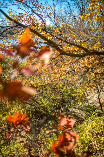 Katy Trail near Rocheport, Missouri - 11-9-13 - C1-0165 - 72 ppi