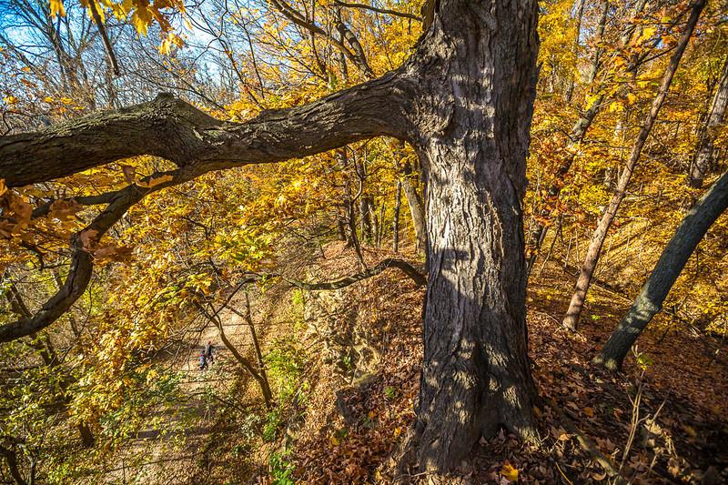 Katy Trail near Rocheport, Missouri - 11-9-13 - C1-0462 - 72 ppi