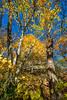 Katy Trail near Rocheport, Missouri - 11-9-13 - C1-0082 - 72 ppi